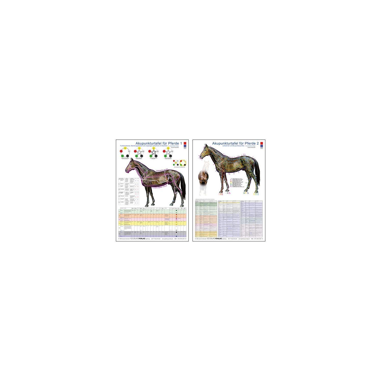 Fantastisch Pferd Bein Anatomie Fotos - Menschliche Anatomie Bilder ...
