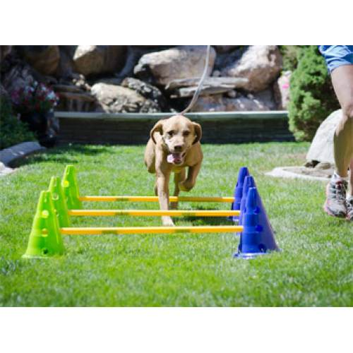 FitPAWS CanineGym® Dog Agility Kit